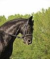 Abkauen des Pferdes.jpg