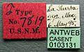 Acanthostichus texanus casent0103131 label 1.jpg