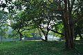 Acharya Jagadish Chandra Bose Indian Botanic Garden - Howrah 2011-01-08 9854.JPG