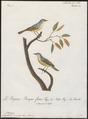 Aegithalus minutus - 1796-1808 - Print - Iconographia Zoologica - Special Collections University of Amsterdam - UBA01 IZ16100185.tif