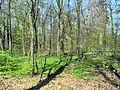 Affoltern - Seeholz - Katzensee 2012-04-01 14-16-46 (P7000).JPG