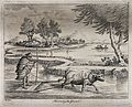 Agriculture; preparing rice paddies in China with an ox-draw Wellcome V0025719.jpg