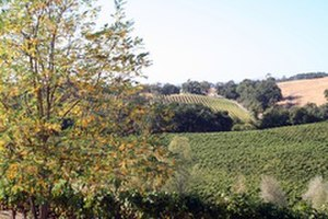 Wine Country (California) - Alexander Valley - Sonoma