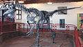 Allosaurus atrox Cleveland-Lloyd Quarry.jpg