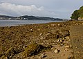Along the Menai Strait - geograph.org.uk - 1408083.jpg