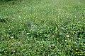 Alpine meadow (Gru) (31603036680).jpg