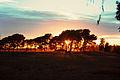Amanecer pampeano (9144798219).jpg