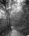 An Autumn pathway, zoo park 4a13181v.jpg