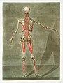 Anatomical illustration by Arnauld-Eloi Gautier-Dagoty , digitally enhanced by rawpixel-com 10.jpg