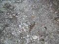 File:Anguis fragilis.ogv