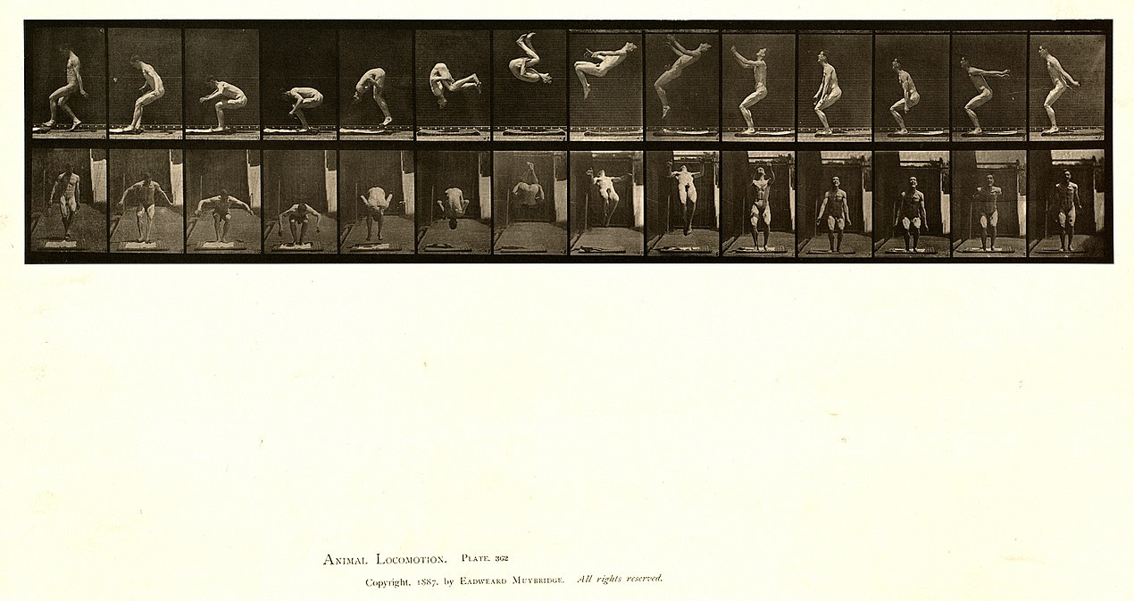 Animal locomotion. Plate 362 (Boston Public Library).jpg