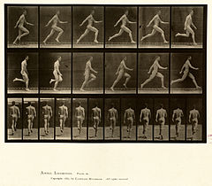 Animal locomotion. Plate 64 (Boston Public Library).jpg