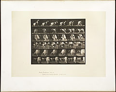 Animal locomotion. Plate 713 (Boston Public Library).jpg