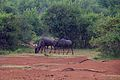 Animals at Pilanesberg National Park 14.jpg