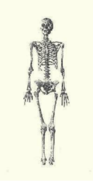 Agnes of Antioch - Skeleton of Queen Agnes