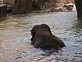 Antwerp Zoo (12211051204).jpg