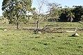Araguainha - State of Mato Grosso, Brazil - panoramio (1164).jpg