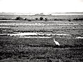 Aransas National Wildlife Refuge March 2017.jpg