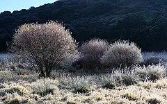 Arbustos en invierno (47226347152).jpg