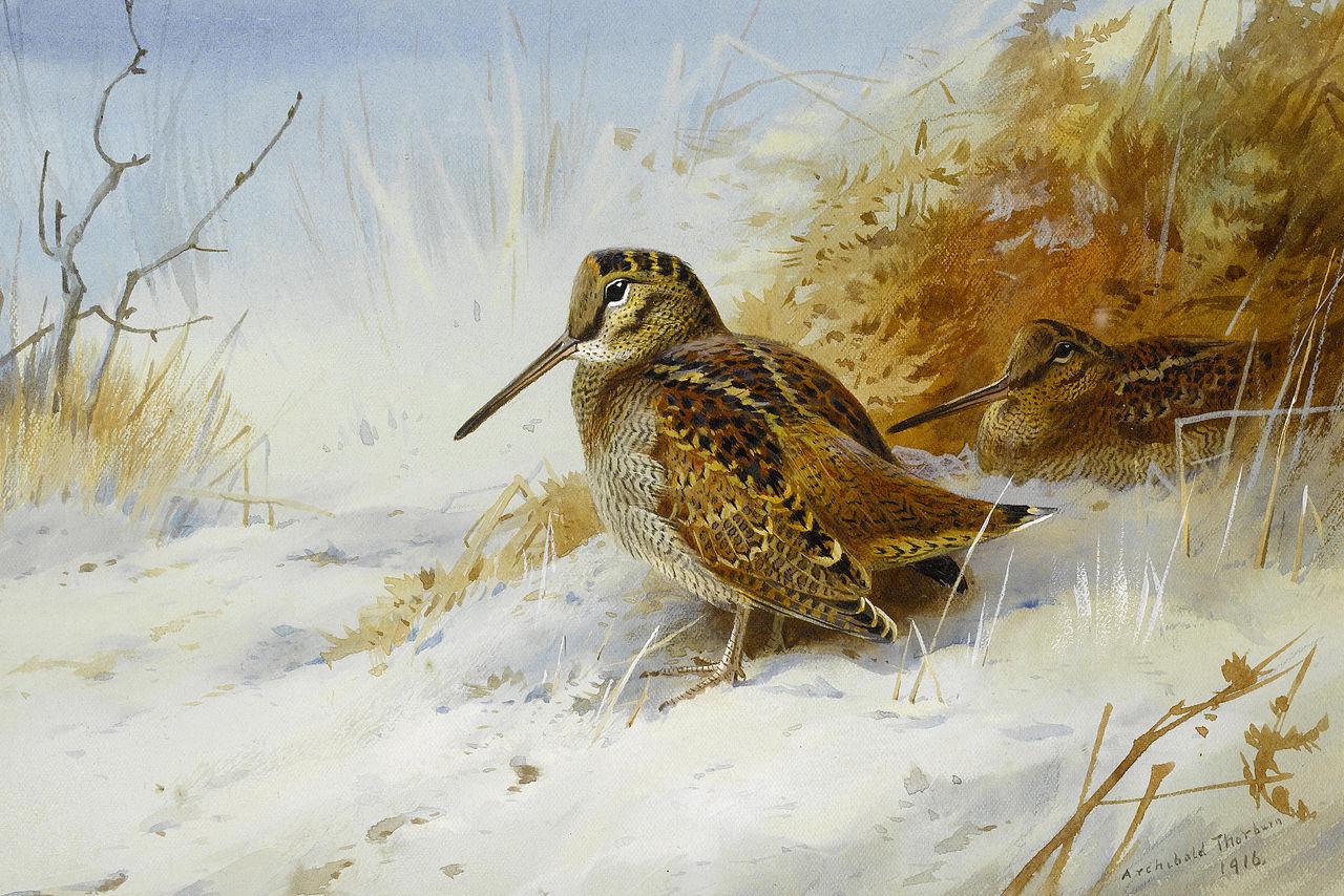 Archibald Thorburn Winter Woodcock 1916.jpg