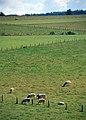 Ardennenlandschaft-10-2002-gje.jpg