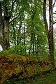 Armadale Castle - gardens 7.jpg