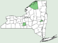 Artemisia pontica NY-dist-map.png