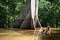 As aguas de julho na amazonia.jpg
