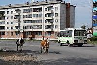 Asino, street scene.jpg