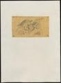 Astur aequatorialis - 1863-1876 - Print - Iconographia Zoologica - Special Collections University of Amsterdam - UBA01 IZ18300143.tif