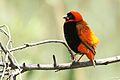 Austin Roberts Bird Sanctuary-016.jpg
