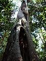 Australia Cairns 12.jpg