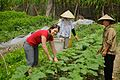 Australian volunteer Tamara Baillie worked as a business development officer with the Thanh Xuan Organic project in Vietnam, 2010. Photo- Tamara Baillie - AusAID (10676205523).jpg