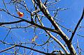 AutumnTreeLonelyLeaves.jpg