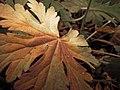 Autumn (17649405).jpeg