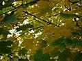 Autumn E4.jpg