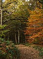 Autumn colour in Shining Cliff Wood - geograph.org.uk - 617004.jpg