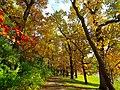 Autumn in Middleton - panoramio.jpg