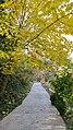 Autumn season in Butanic Garden فصل پاییز در باغ بوتانیکال تفلیس 13.jpg
