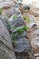 Avakas Gorge, Akamas Peninsula, Cyprus - panoramio (5).jpg