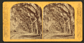 Avenue in Bonaventure, near Savannah, Georgia, from Robert N. Dennis collection of stereoscopic views 5.png