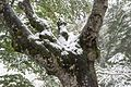 Bäume Schauinsland (Freiburg) jm22320.jpg