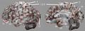 BA on 3D-SSP images.png