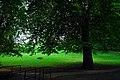 Backhouse Park - panoramio - somaliayaswan (3).jpg