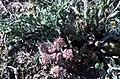 Badlands Flowers- Red, Pink, Blue (bbd0b946-6641-49c1-8ef3-252de614fb8d).jpg