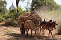 Bagan (6795444419).jpg