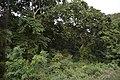 Bahadurpur Forest Reserve - Nadia 2017-08-15 2370.JPG