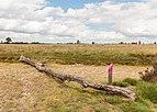 Balloërveld, natuurgebied in Drenthe 21.jpg