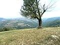 Banat, Gärnik-Rovensko - panoramio (20).jpg