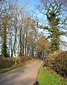 Band of woodland by Bradley Lane - geograph.org.uk - 330183.jpg
